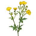 Kunstblume/Seidenblume Butterblume