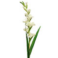 Kunstblume Gladiole Real Touch