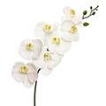 Kunstblume/Seidenblume Phalaenopsis-Orchidee groß