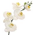 Kunstblume/Seidenblume Phalaenopsis-Orchidee mittel