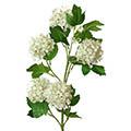 Kunstblume/Seidenblume Schneeball mit 5 Blütenballen