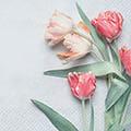 Serviette Tulipe