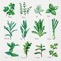 Serviette Herb