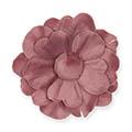 Samtblüten Cynthia